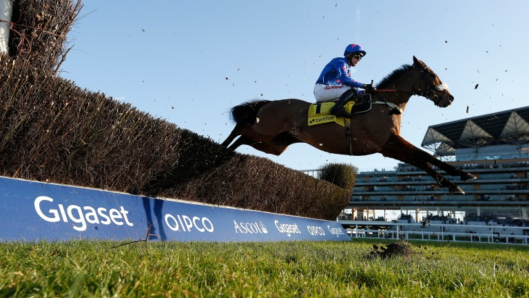 Cue Card: bounced back from last year's Gold Cup fall in this race