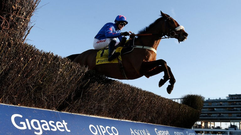 Seeing a stride: Cue Card measures the final fence to perfection on his way to a wide-margin win