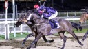 Doc Sportello: bids to follow up last month's fast track qualifier success at Newcastle