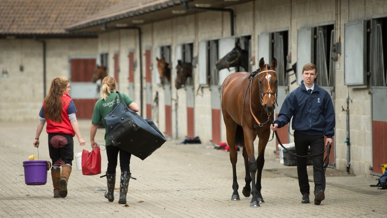 Stable staff keep the show running at Lingfield