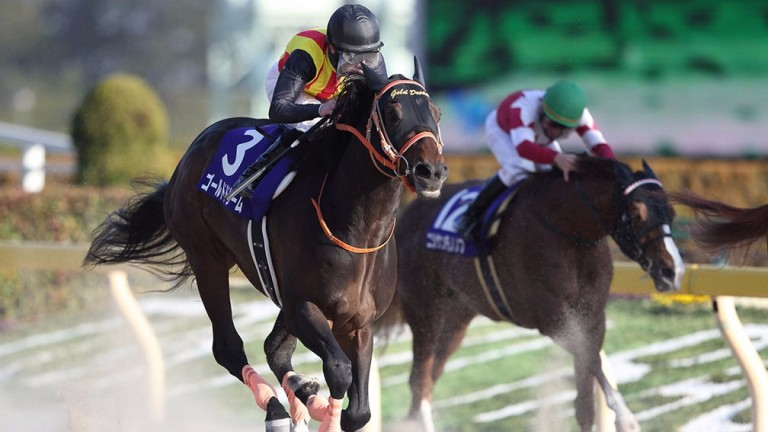 Gold Dream (3) wins the February Stakes at Tokyo racecourse