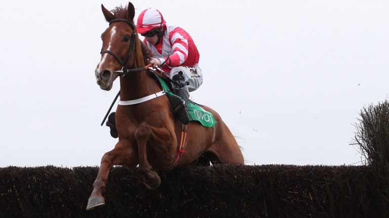 Acappella Bourgeois has schooled well since his Troytown Chase fall