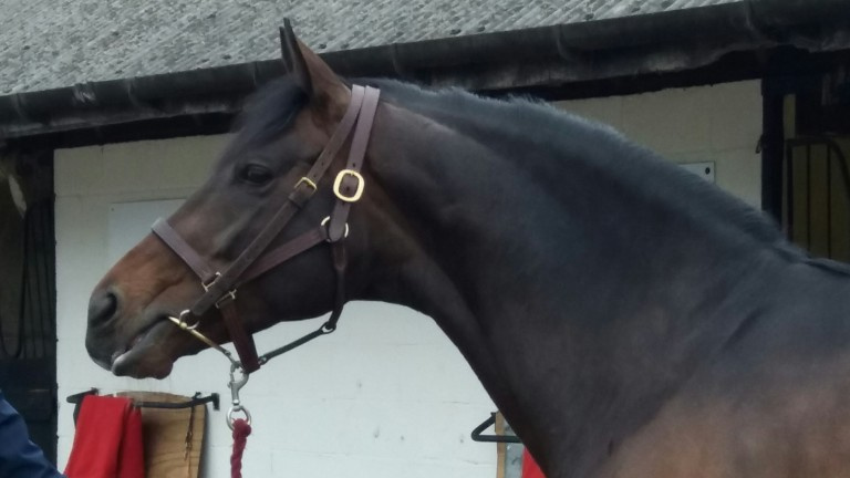 Hardwicke Stakes scorer Telescope strikes a pose at the Shade Oak Stud open day