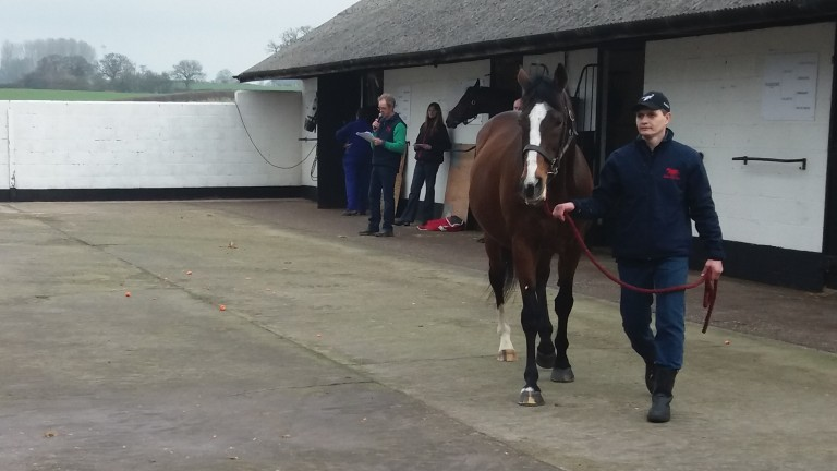 Black Sam Bellamy, a brother to Galileo, is paraded at the Shade Oak Stud open day