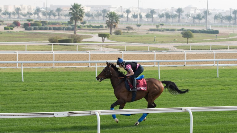 Arab Spring and Ewelina Galecka work on the turf track at Al Rayyan racecourse ahead of his run in Saturday's HH The Emir's Trophy