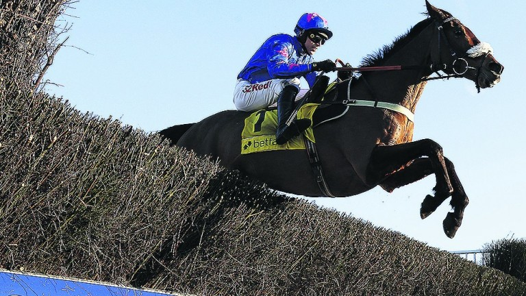 Cue Card: star was last seen in November's Betfair Chase
