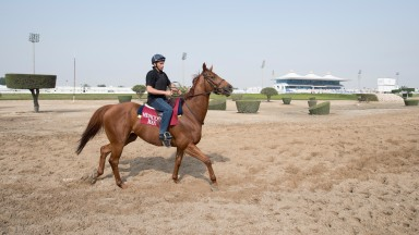 Jeremy Gask's Medicean Man (Neil Walsh) walks along the sand track in the centre of the racecourseAl Rayyan racecourse, Doha 23.2.17 Pic: Edward Whitaker