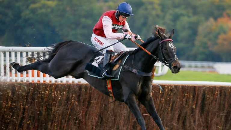 Our Kaempfer: more to come over fences this season