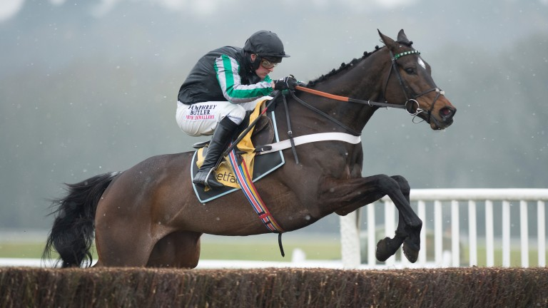 Altior: all the rage for Arkle