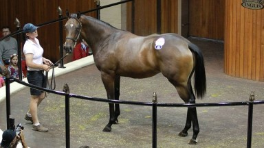 A Fastnet Rock filly is sold at the Premier Yearling Sale in 2016