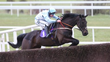 Alisier D'Irlande: was bred by Marie Drion