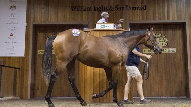 The I Am Invincible colt bought by Ciaron Maher at Inglis on Monday