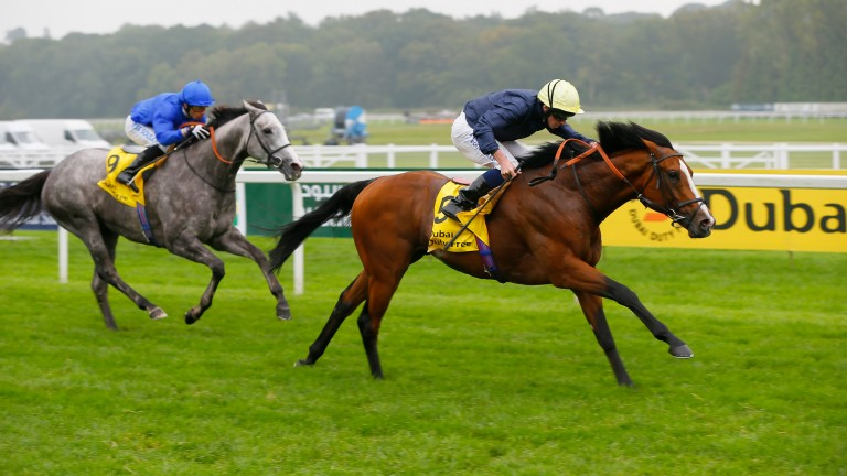 Hillstar: was trained by Sir Michael Stoute to win the Canadian International