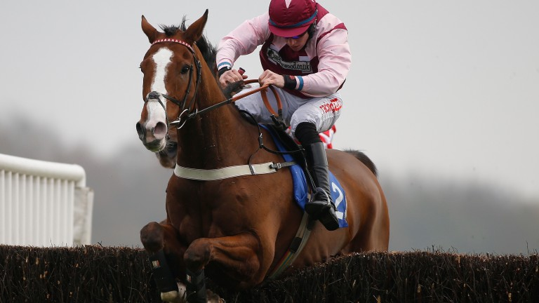 Emerging Force: next race was due to be the Becher Chase