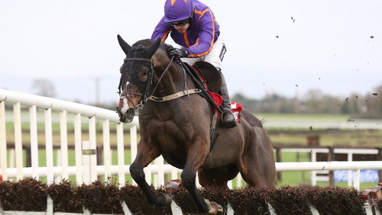 Arctic Fire: is the star on show at Cork