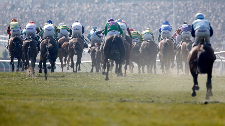 CHELTENHAM, ENGLAND - MARCH 17:   A general view as runners turn into the straight and race towards the last flight of hurdles in The Pertemps Network Final clear a hurdle in the country during Cheltenham Festival - St Patrick's Thursday at Cheltenham rac