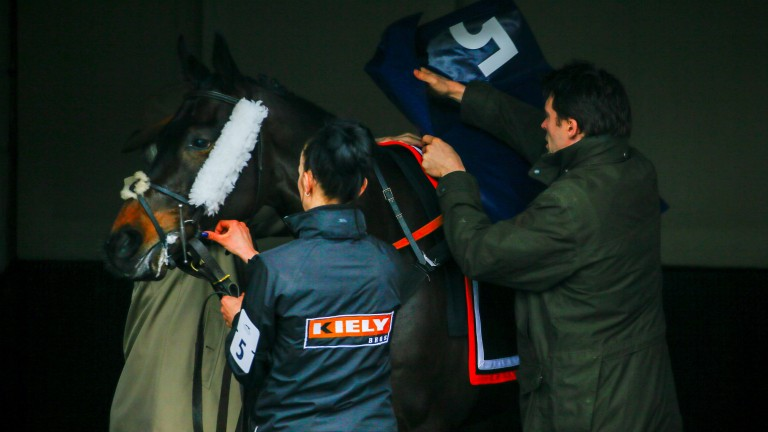 Getting ready: Michael Scudamore and his team tack up eventual 2m juvenile hurdle winner Dinsdale