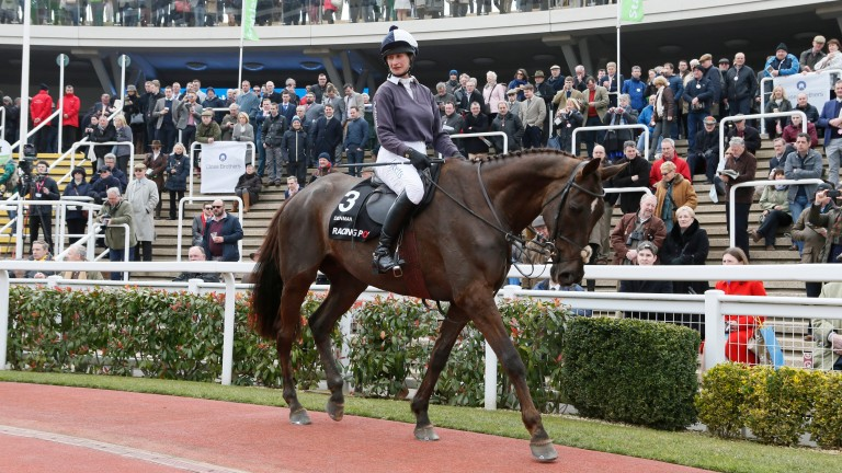 Denman taking part in last year's Retraining of Racehorses parade at Cheltenham