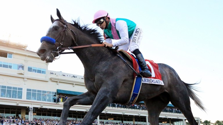 Wonder horse Arrogate was cut to 1-3 from evens for the Dubai World Cup later this month