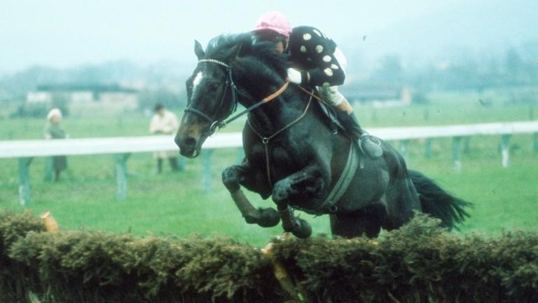 Willie Wumpkins: unique festival favourite was ridden by Jim Wilson