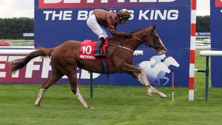 Top Notch Tonto: warms up for Betway Lincoln at Wolverhampton on Saturday