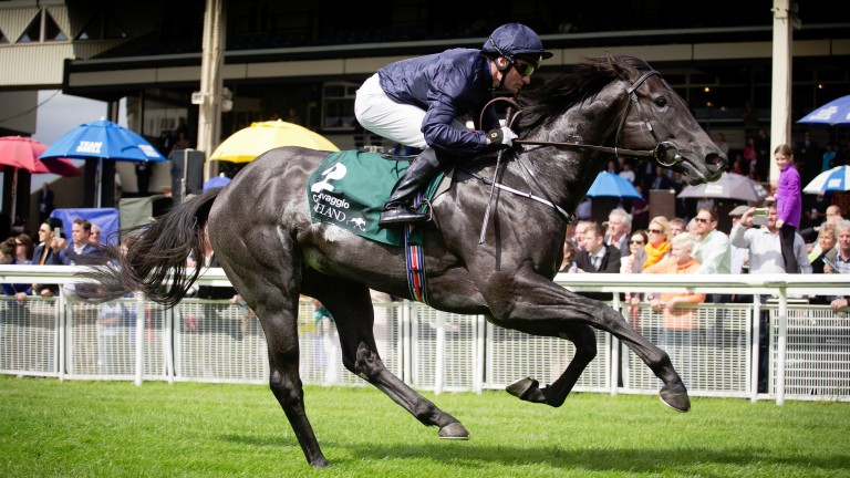 Caravaggio: returns to action in the Group 3 Lacken Stakes