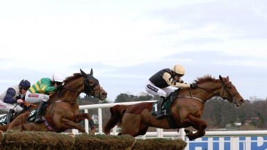Meri Devie is fancied to get back to winning ways at Limerick for Willie Mullins