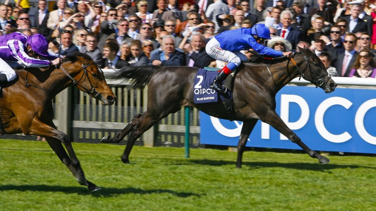 Blue Bunting lands the first of two Classic successes in the 1,000 Guineas at Newmarket