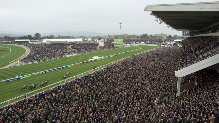 The Cheltenham Festival attracts big crowds and plenty of interest