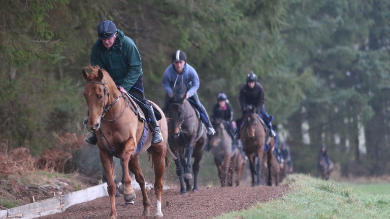 SIMPLY NED ridden by his trainer Nicky Richards leads the Greystoke string as he prepares for a trip to the festival to take on the mighty DOUVAN - Greystoke 17/2/17Photograph by Grossick Racing Photography07710461723