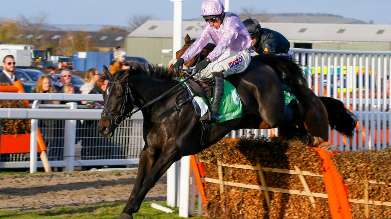 North Hill Harvey: could be an exciting recruit to novice chases this season
