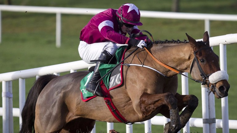 Death Duty: the Gigginstown-owned gelding embarks on a chasing career at Tipperary on Tuesday