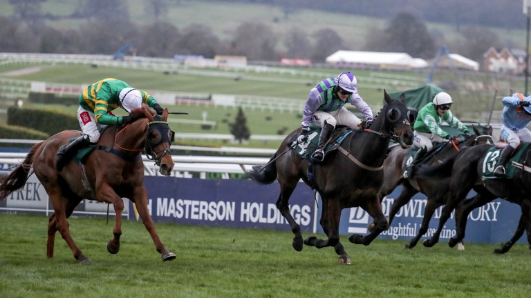 Pendra (left) just loses out to Domesday Book at Cheltenham