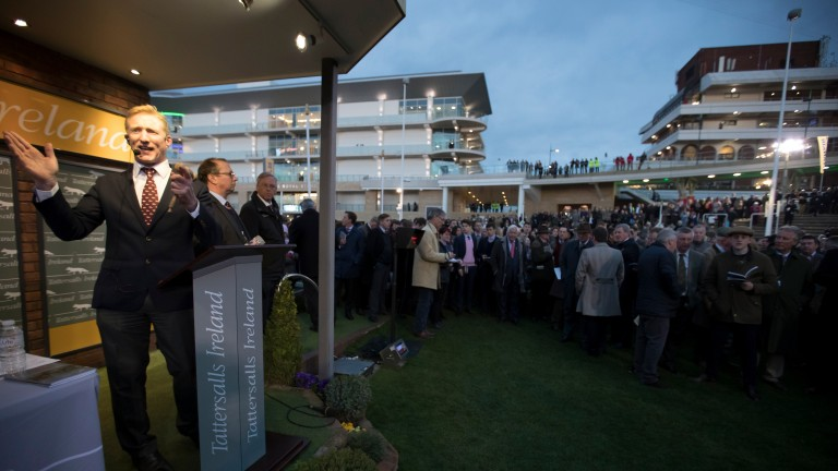 Alastair Pim holds court as potential jumps stars go under the hammer in the Cheltenham parade ring