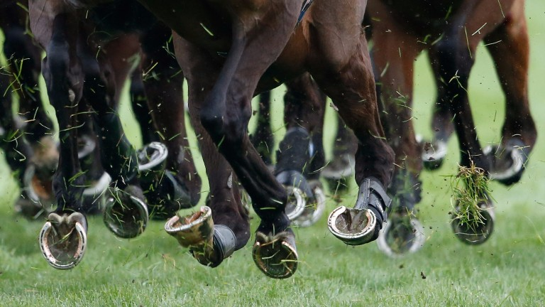 Cheltenham: going good, good to soft in places for the two-day October meeting