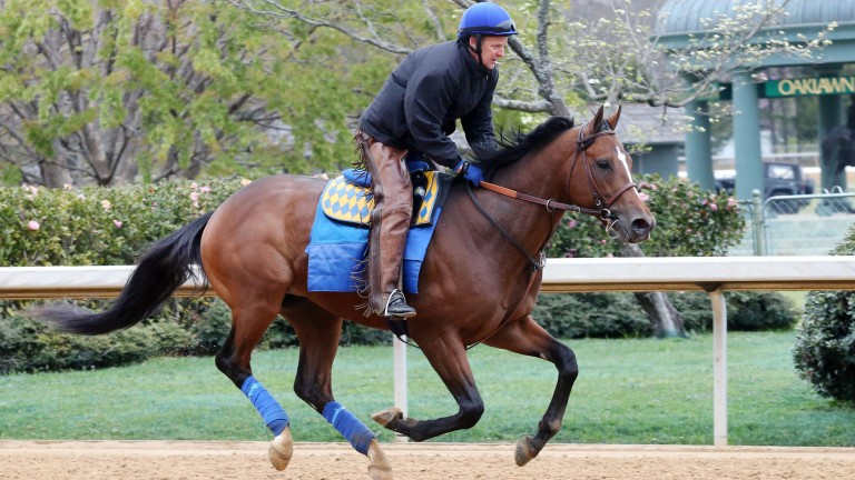 American Anthem gallops at Oaklawn Park before the Rebel Stakes