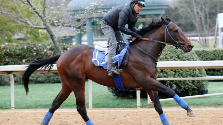 Royal Mo has a spin at Oaklawn Park in preparation for the Rebel Stakes