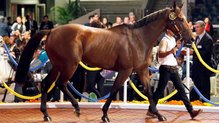 The son of Hussonet who topped the Hong Kong International Sale