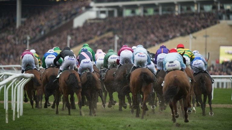 They're off: the huge field in the County Hurdle make their way towards the grandstand