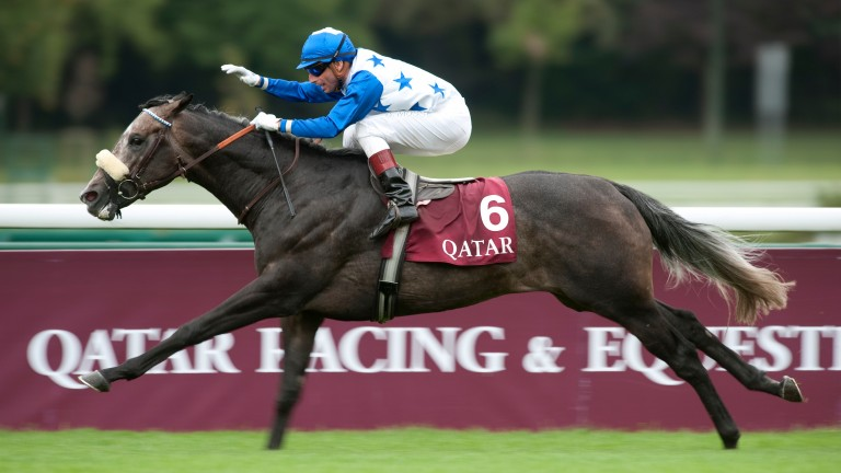 Reliable Man: wins the Prix Niel, a key Arc trial, at Longchamp in 2011