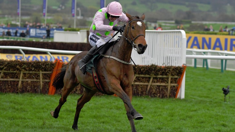 Two of our experts think Let's Dance (pictured) looks value for the OLBG Mares' Hurdle next year