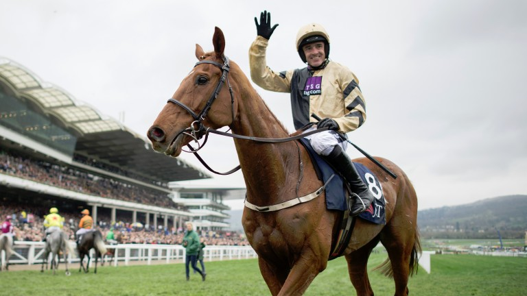 Yorkhill: unbeaten at the Cheltenham Festival and could be a Gold Cup contender in 2018