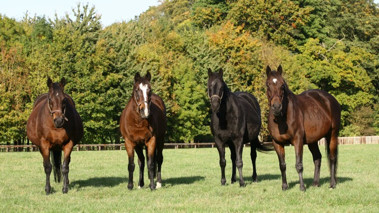 Reservoir of talent: (from left) Banks Hill, Hasili, Heat Haze and Intercontinental line up at Banstead Manor Stud