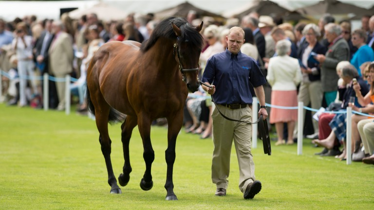 Dubawi: the Dalham Hall Stud kingpin is the sire of Thirsk debutant Secret Advisor