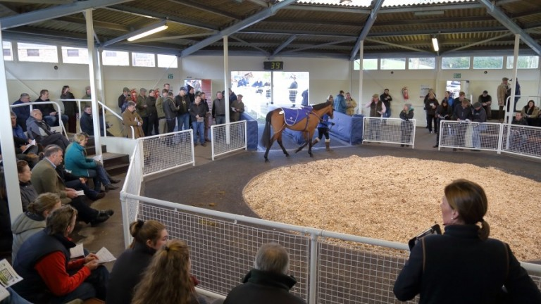 Tattersalls Ireland: 34 wildcard entries have been added to the Ascot March Sale