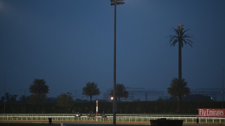 Under the floodlights: horses during an early morning workout on the track