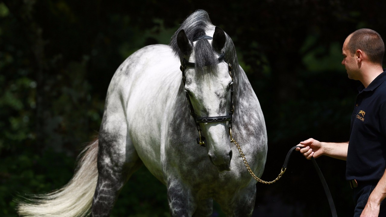 Dark Horses Promise A Bright Year Ahead For Coolmore Sire