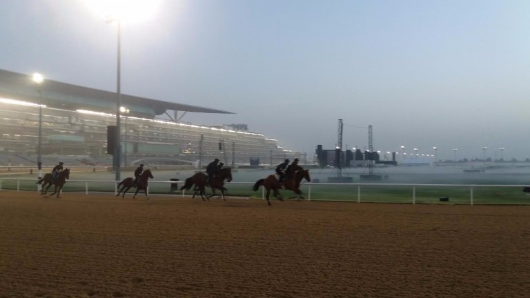 A group of horses work at Meydan on Wednesday morning