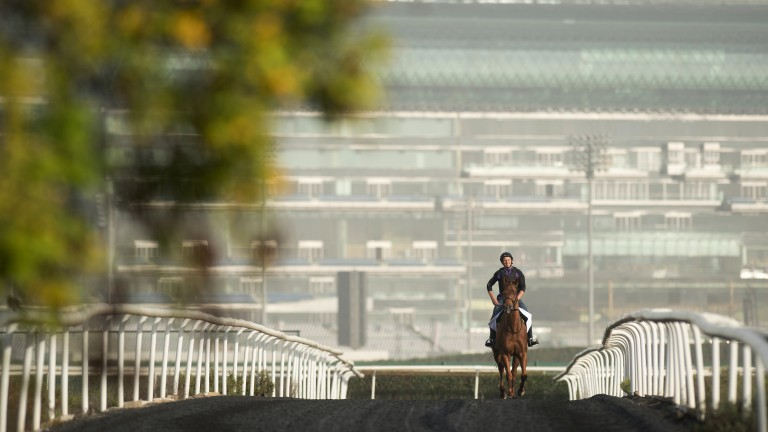On the way: Medicean Man walks out to the turf training track