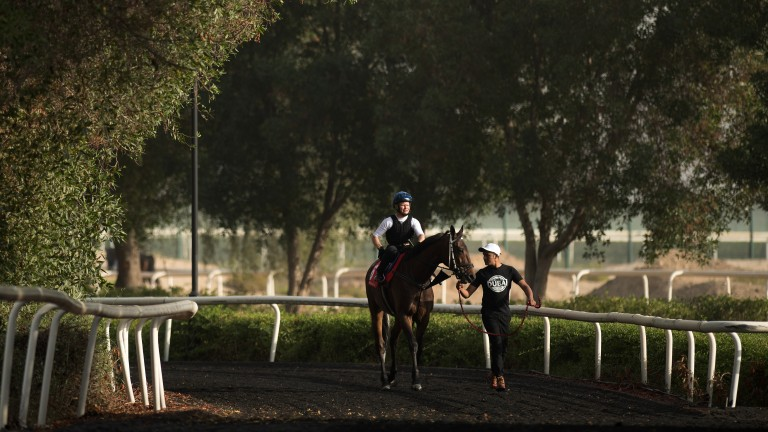 Under the trees: Singapore-based Quechua makes his way out to the turf training track